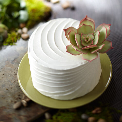 Succulent Topped Cake
