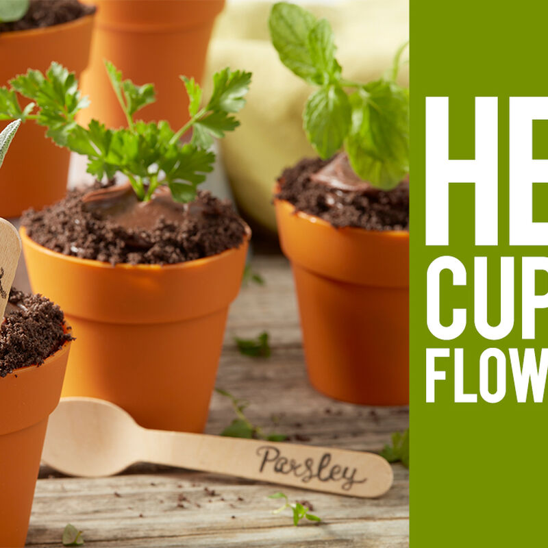 How to Make Herb Cupcake Flower Pots