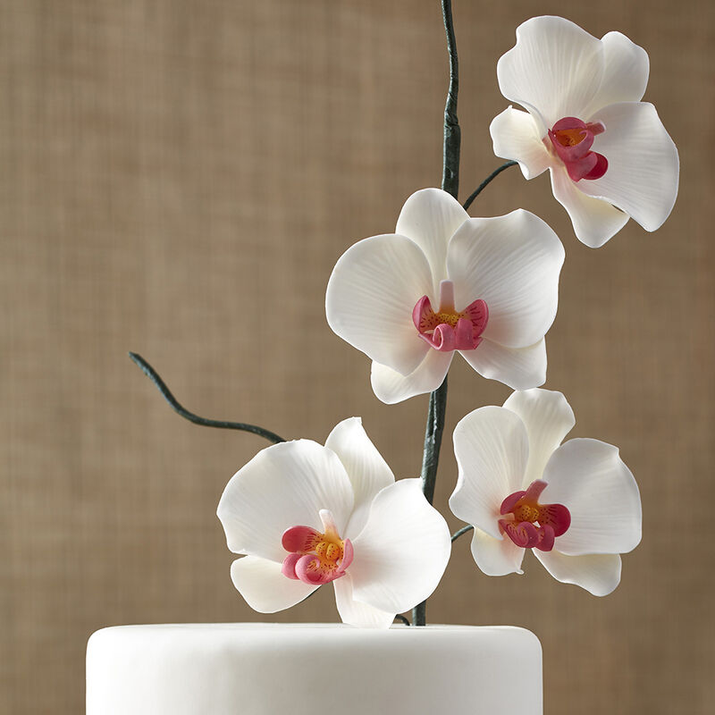 Exotic Painted Orchid Cake image number 1