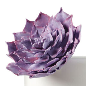 Gum Paste Echeveria Succulent