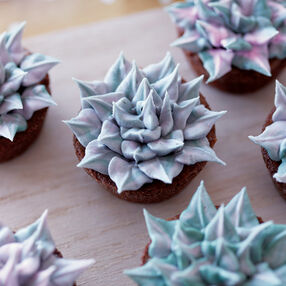Winter Succulent Brownies
